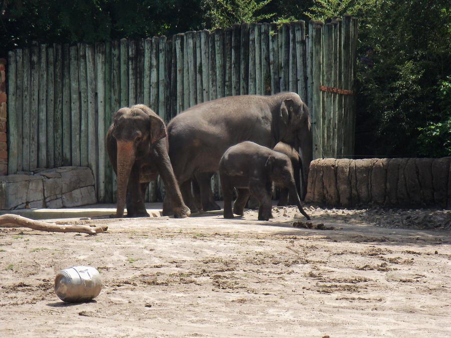 More Elephants by jenniferhl72