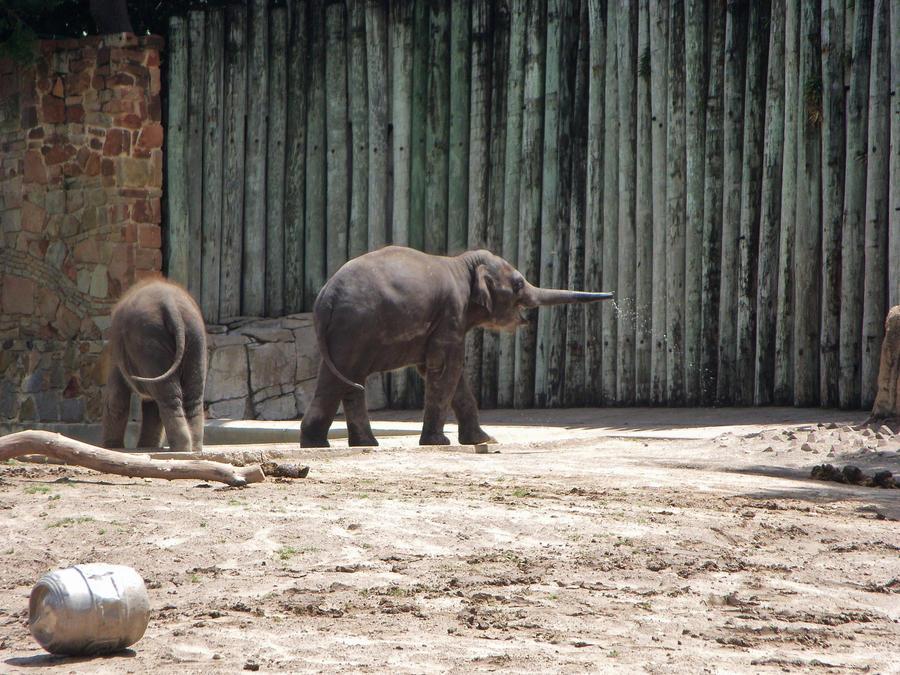 Baby elephant by jenniferhl72
