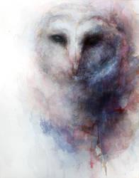 owl by PEHDTSCKJMBA