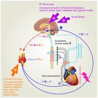 Thyroid hormones and takotsubo syndrome