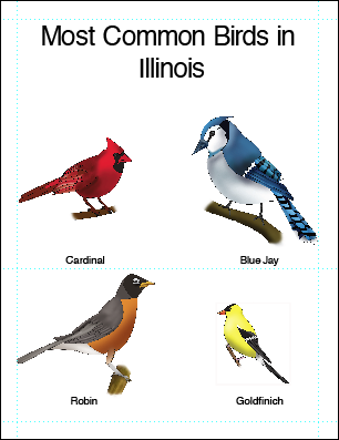 Common Illinois birds by Ashcaleena on DeviantArt