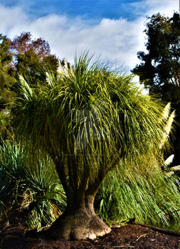 Adelaide Botanical Garden Series - 01