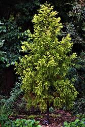 Adelaide Botanical Garden Series - 02
