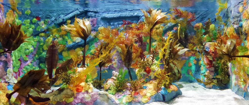 Aquatic Sea Life