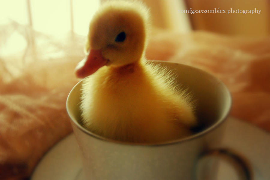 Ducklings And Teacups II by xOMFGxAxZOMBIEx on DeviantArt