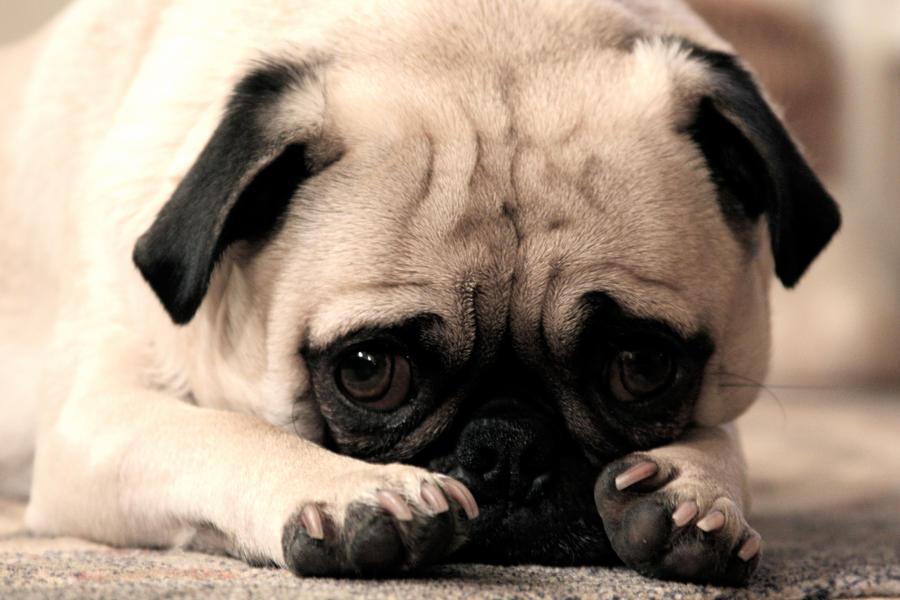 Images Sad Puppy Dog Eyes Sorry