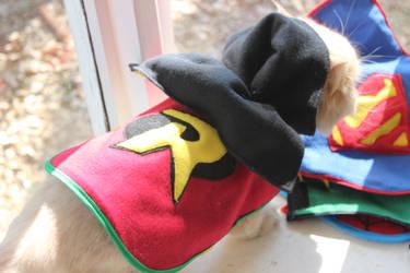 Robin pet coat
