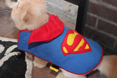 Superman pet coat