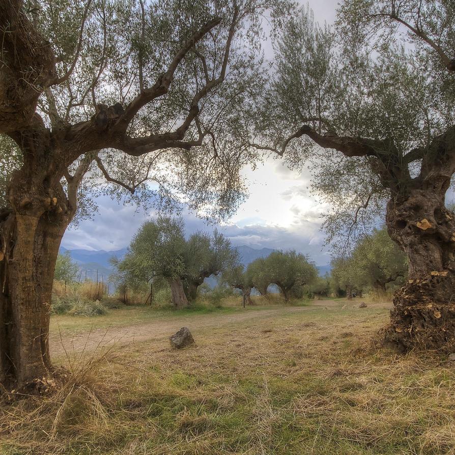 Greece - Sparta - Archeologist Site of Sparta - 03 by GiardQatar