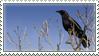 Crow Stamp by Krisderp