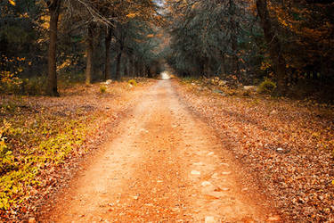 The Path to Winter by hougaard
