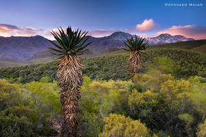 Standing Strong by hougaard