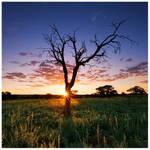 Kalahari Cliche