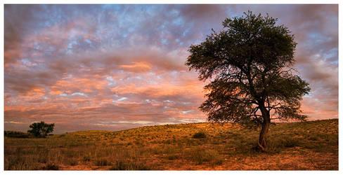 Kalahari Watchman