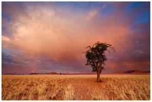 Autumn in the Desert by hougaard