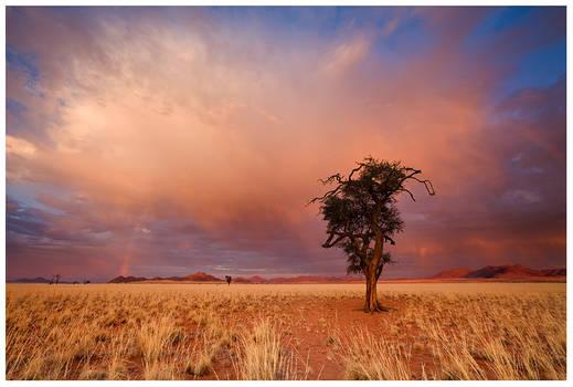 Autumn in the Desert
