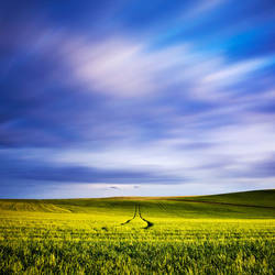 Into the Field by hougaard