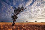 Desert Sentinel