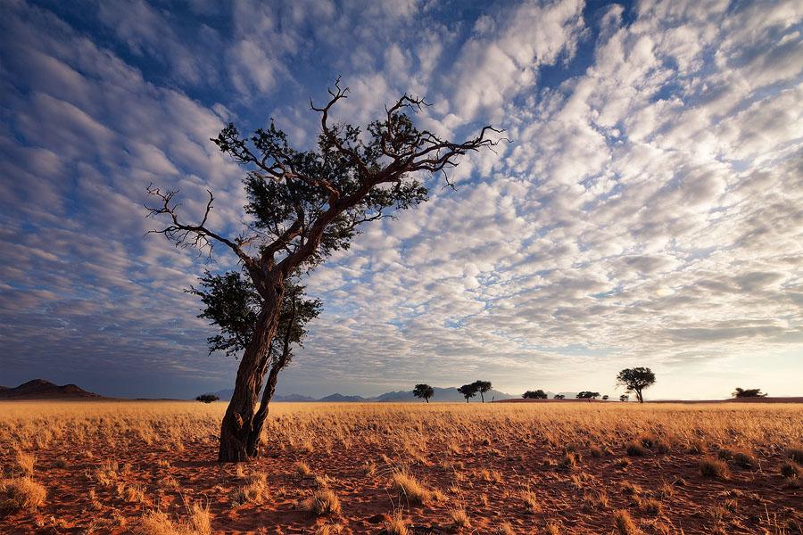 Desert Sentinel by hougaard