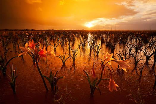Namibian Eden