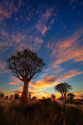 Quiver Tree Forest by hougaard
