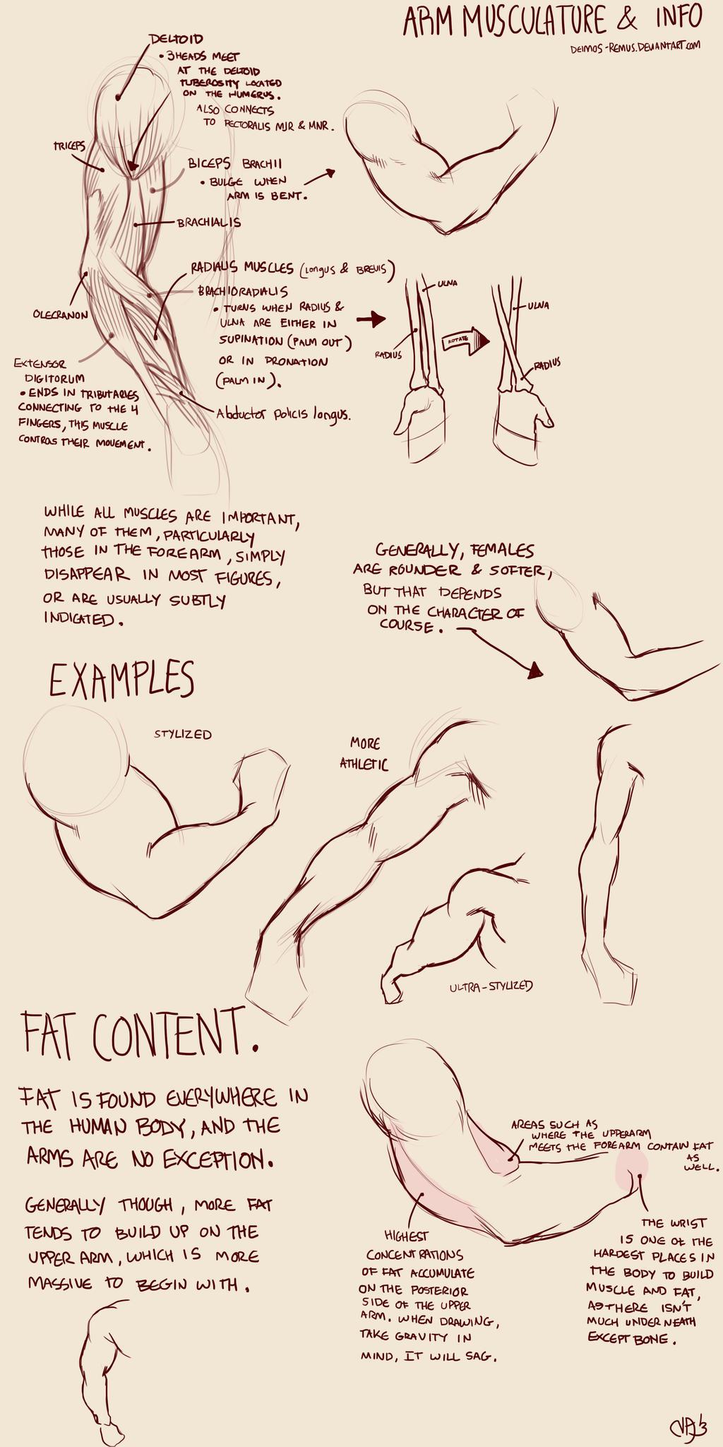 Arm Muscles 101 by Deimos-Remus on DeviantArt