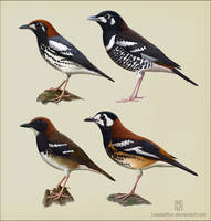 Geokichla thrushes by Leaubellon