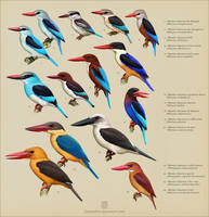 Halcyon kingfishers by Leaubellon
