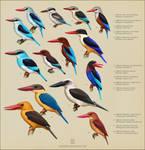 Halcyon kingfishers