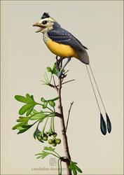 Dapingfangornis sentisorhinus