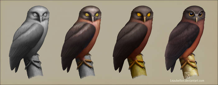 Jungle Hawk-owl