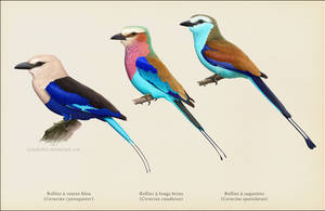 Three roller species by Leaubellon