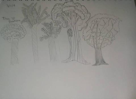 Tree Practice
