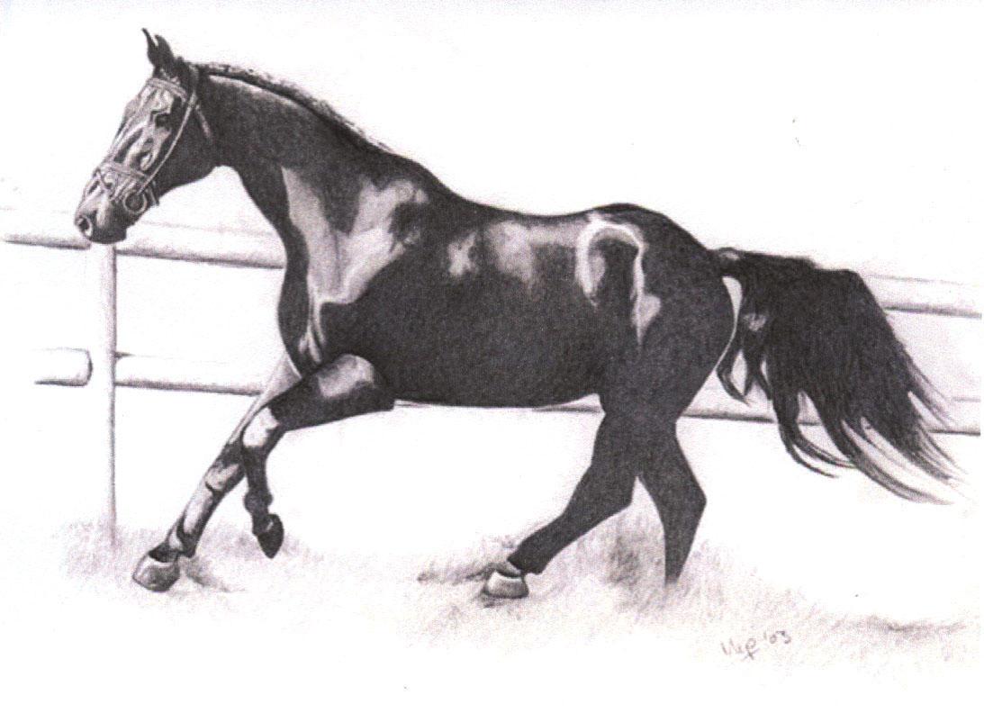 Horses running drawing - photo#14