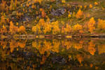 Autumn colors by aptenodyte-s
