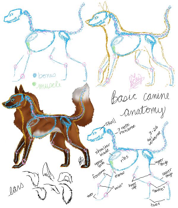 Tutorial - Canine Anatomy by Bonz847