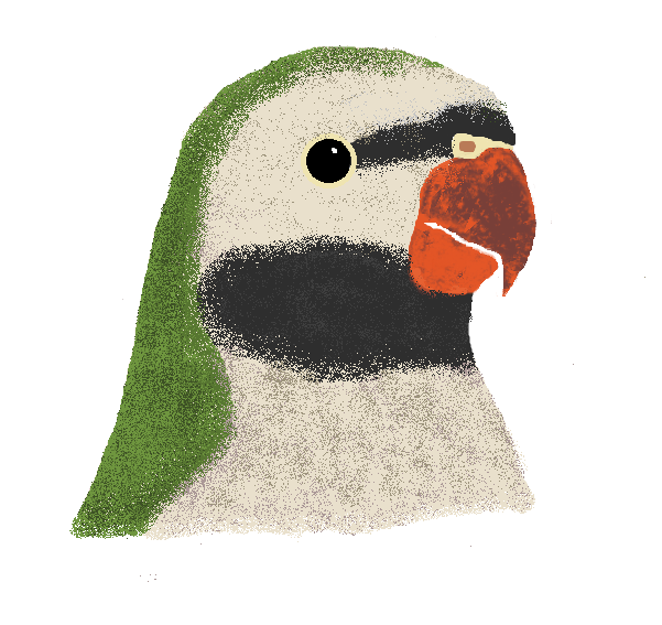 Moustache Parakeet by BirdLuvr801 on DeviantArt