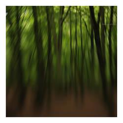 spirit of forest. by davespertine