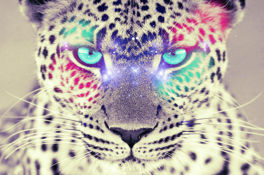 Colorful Leopard by Fepame on DeviantArt