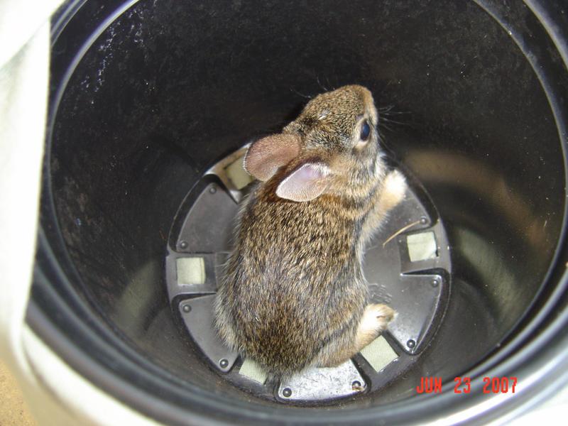 Back Shot Of Baby Bunny by Snipermander - Hey beni burada unuttunuz