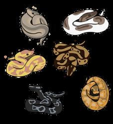 Ball Pythons by Ocny