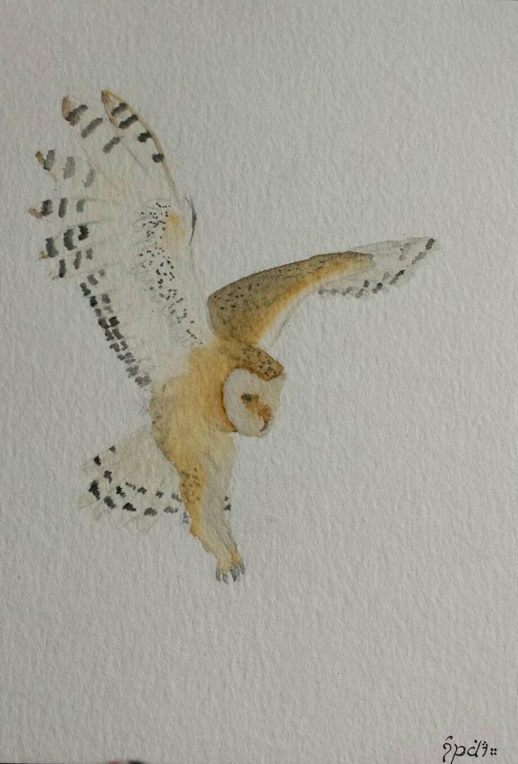 barn owl by SophiaKanthak