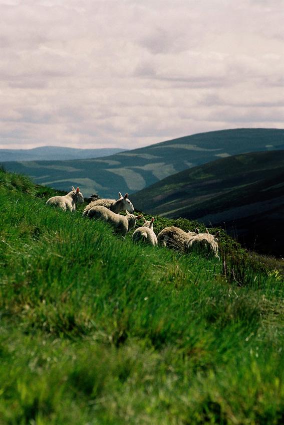Scotland by mathein