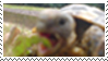 Hunrgy Tortoise Stamp by moondial
