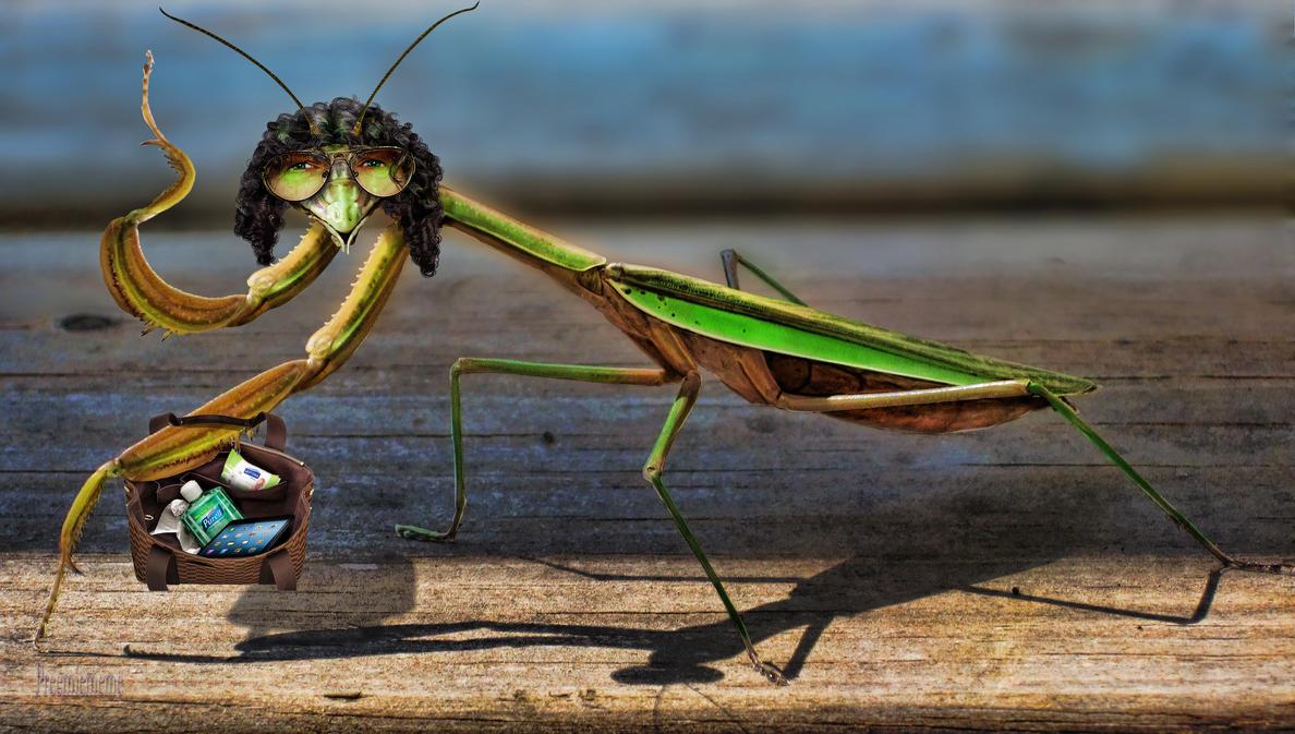 praying mantis Howard Stern by preemiememe