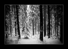 Frozen Forest by ComeWatchMyArt