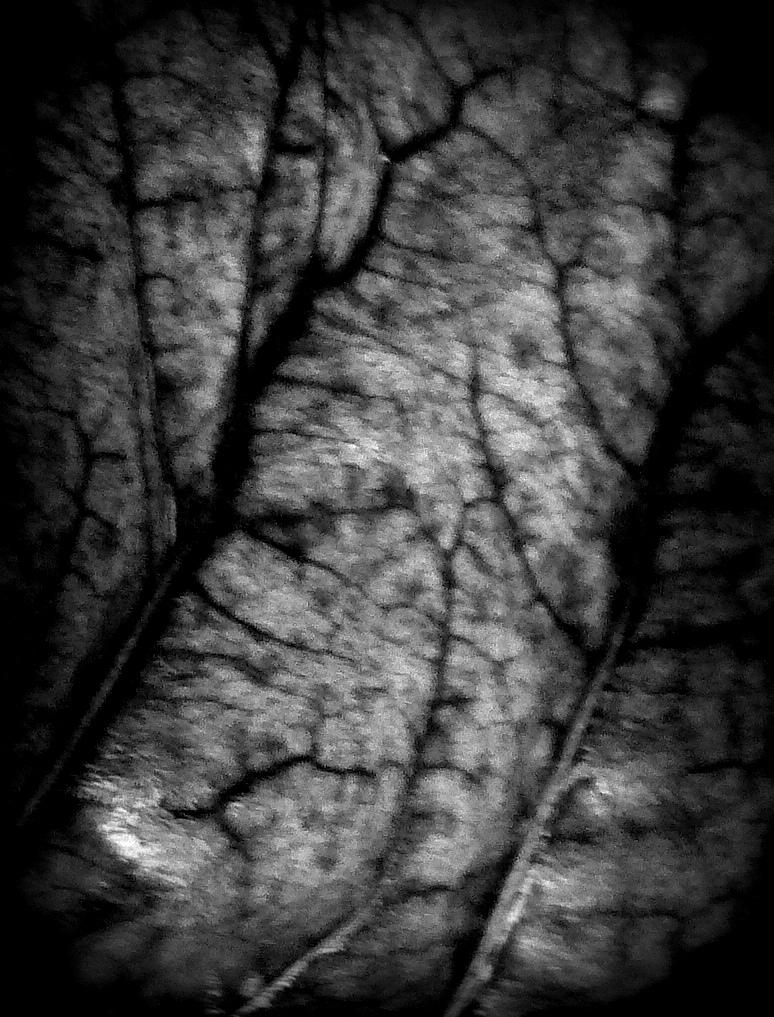 Dark Forest by SophieDereal