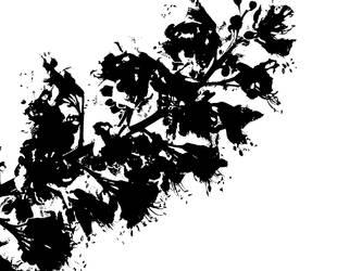 Wallpaper - Nature