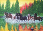 A gallop down the river