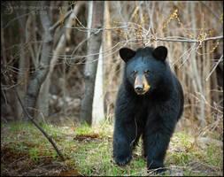 Pooh-Bear by Sarah--Lynne